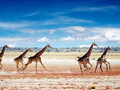 Turistika v divoké přírodě JAR a Namibie