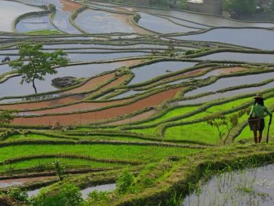 Čína, Laos - poznávací zájezd 'Yunnanskou opiovou stezkou'