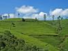 Sri Lanka, čajové plantáže