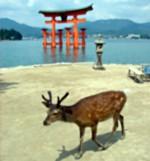 Japonsko Poutnické a Mystické
