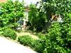 Zahrada je plná zeleně