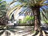 Dům je obklopen palmami