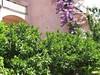 Zahrada v okolí domu