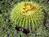 Gomera - kaktusy na suchých závětrných svazích