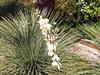 Květ palmy