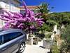 Palma a bugenvilie u domu