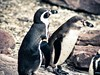 Denně se předvádí při krmení i tučňáci