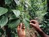 Sri Lanka, Zahrada koření