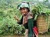Vietnam, květinoví Hmongové
